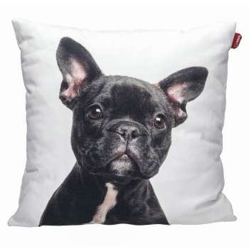 French Bulldog 45x45cm  - Dekoria.se