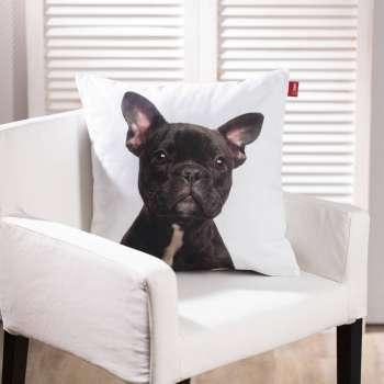 French Bulldog 45x45cm