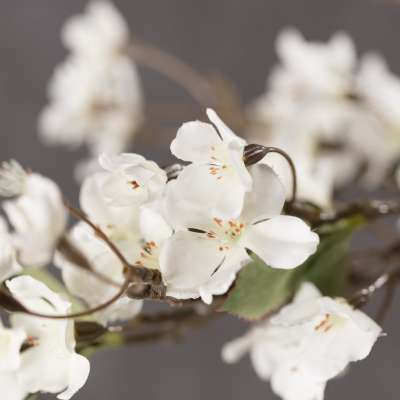 Artifical Apple Tree Twig with White Blossom H 105 cm Artificial Flowers and  Faux Plants - Dekoria.co.uk