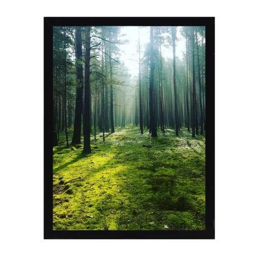 Wandbild Green Forest 30x40cm