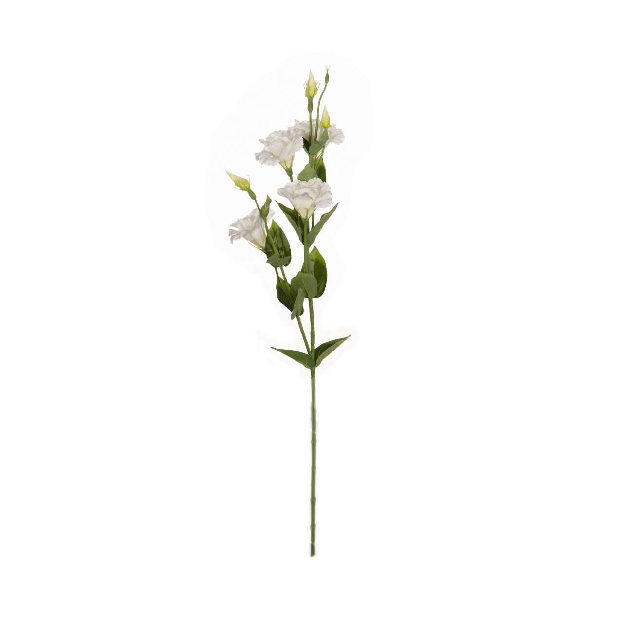 Květ Eustoma výška  80cm