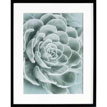 Kunstprint Succulents I 40x50xcm