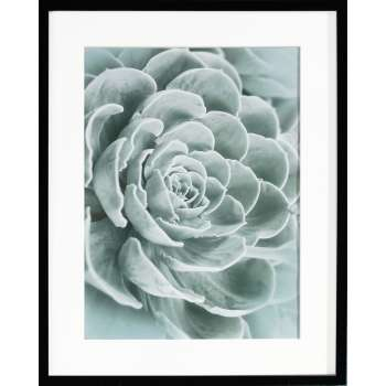 Wandbild Succulents I 40x50xcm