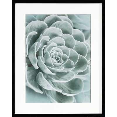 Billede med ramme Succulents I 40x50xcm