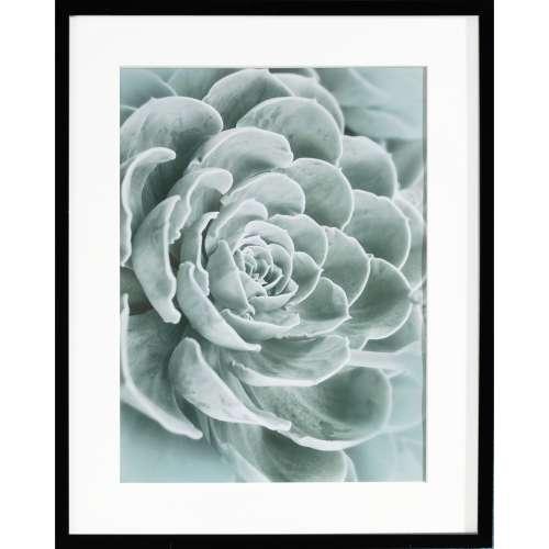 Obraz Succulents I 40x50cm