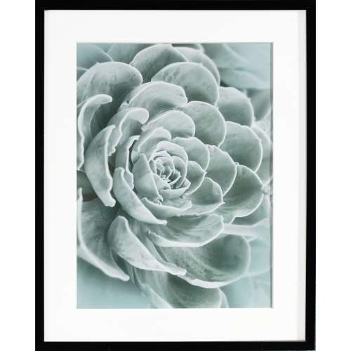 Obraz Succulents I 40x50xcm