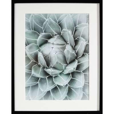 Billede med ramme Succulents II 40x50xcm