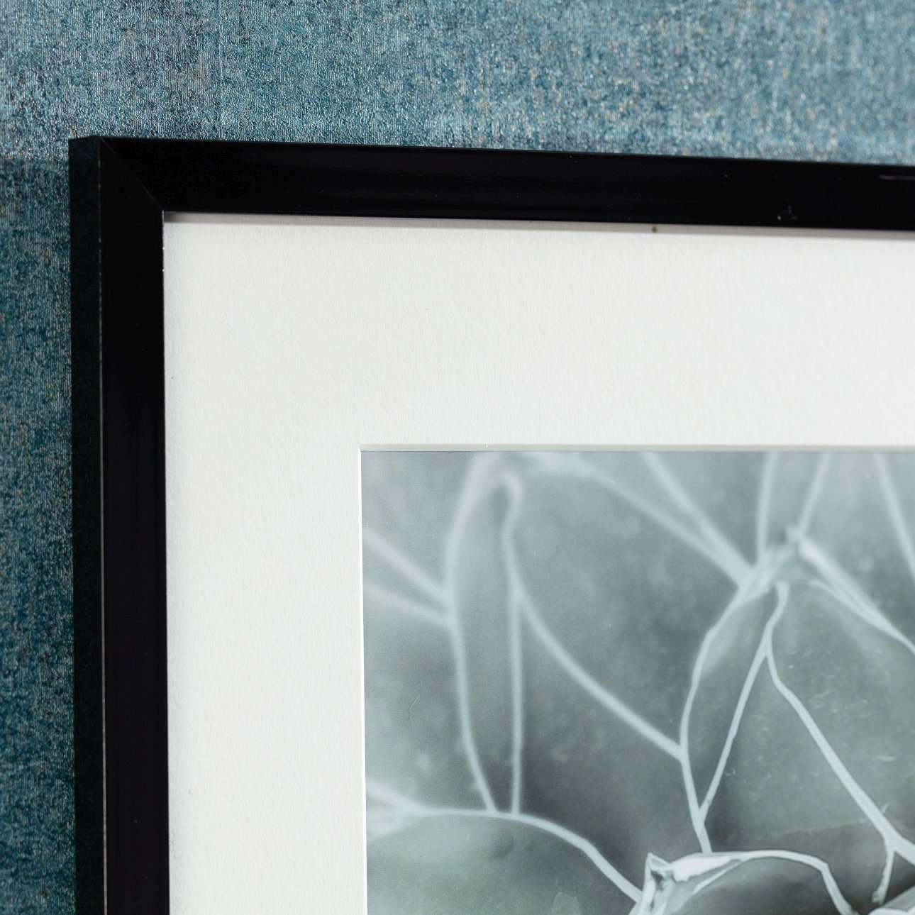 Obraz Succulents II 40x50cm