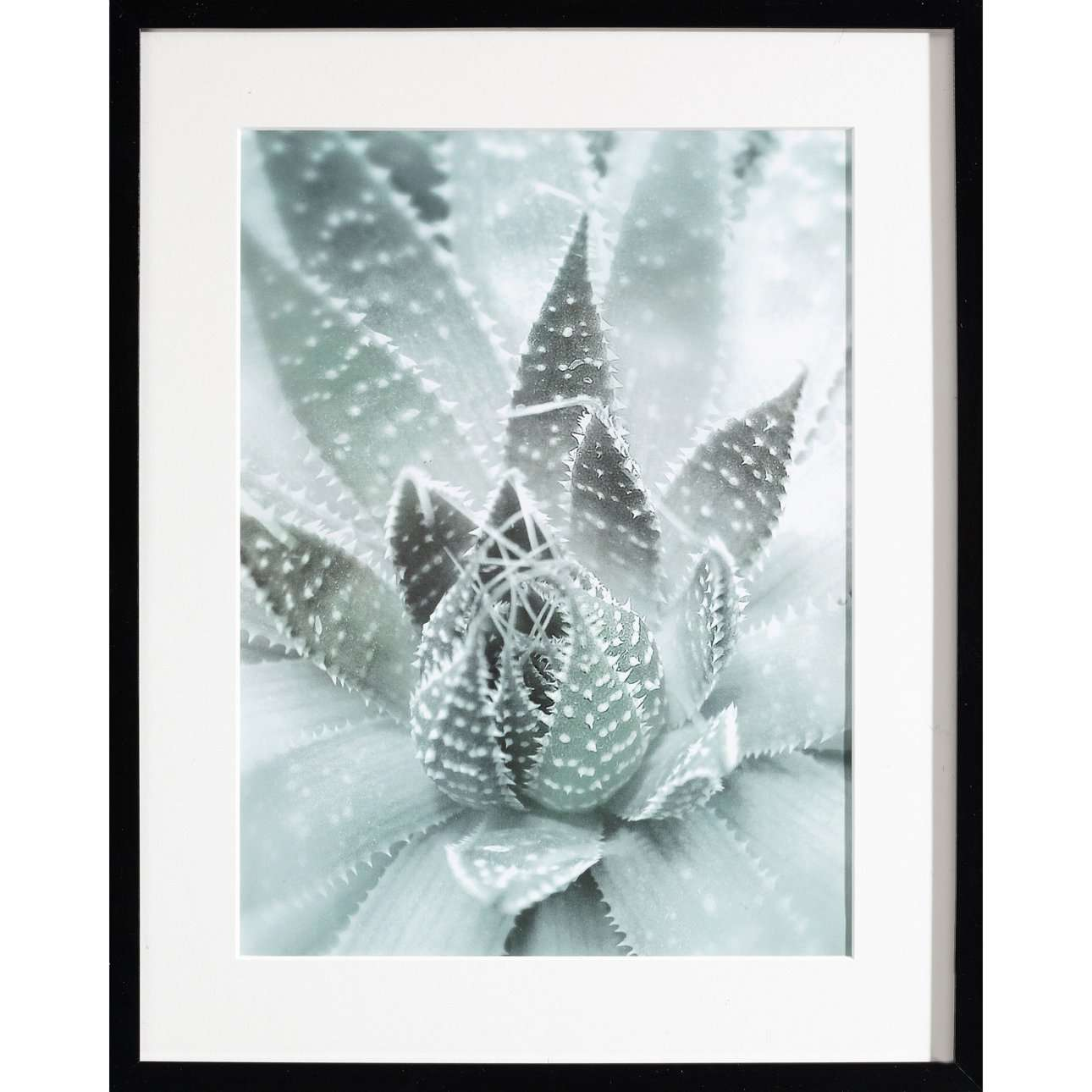 Wandbild Succulents III 40x50xcm