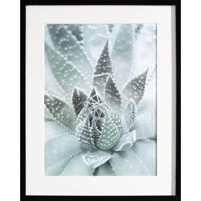 Billede med ramme Succulents III 40x50xcm