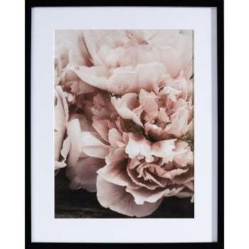 Kunstprint Peony Sunset I 40x50cm
