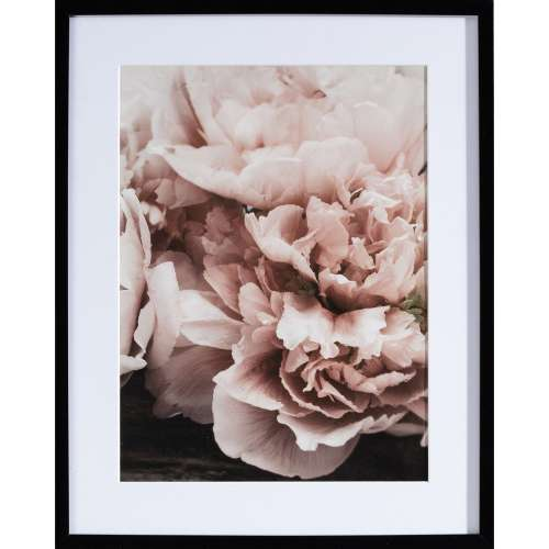 Poster in lijst Peony Sunset I 40x50cm