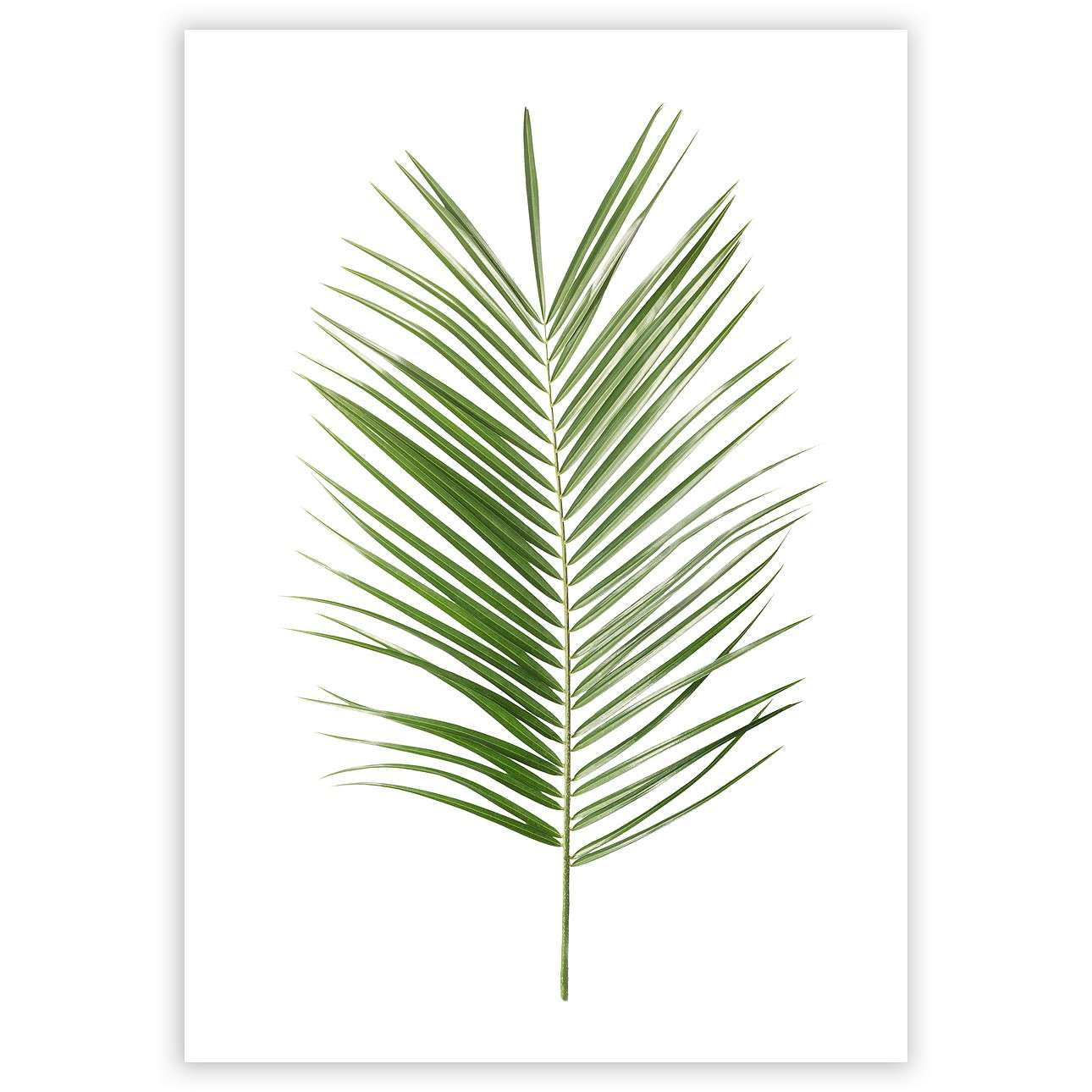 Poster Palm Leaf Green
