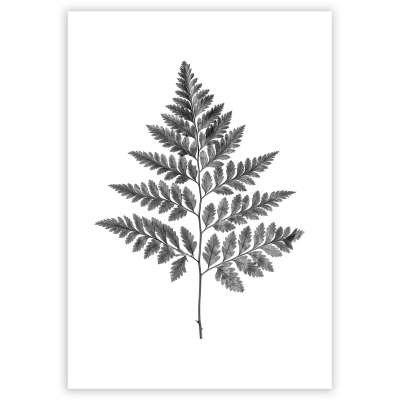 Plakatas Fern Grey