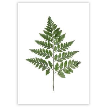 Plakat Fern Green