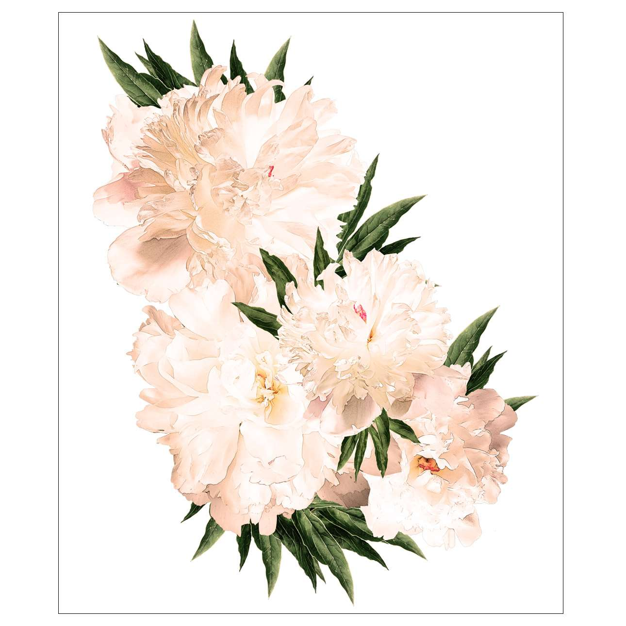 Samolepka Peony flowers