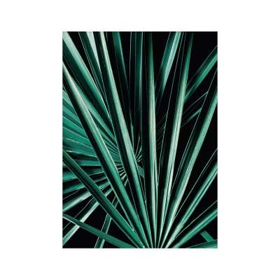 Plakat Dark Palm Tree