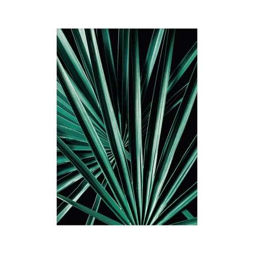 Poster Dark Palm Tree
