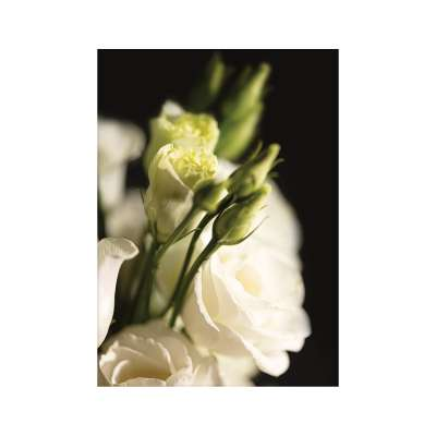 Poster Dark Flowers