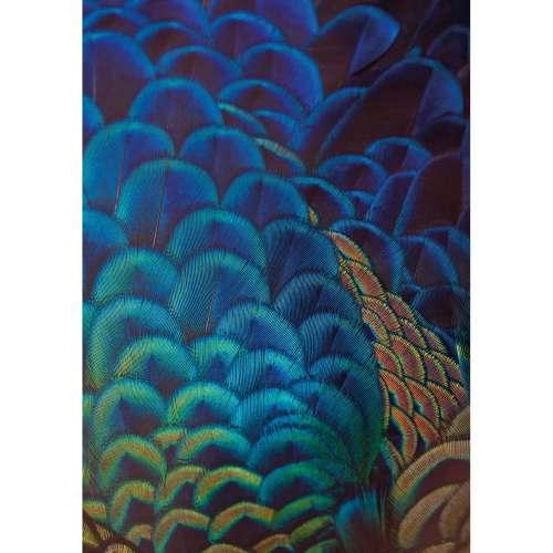 Leinwandbild Multicolor Feathers