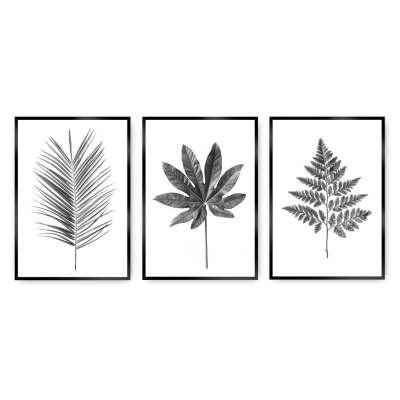 Zestaw obrazów Tropical Grey 3szt.