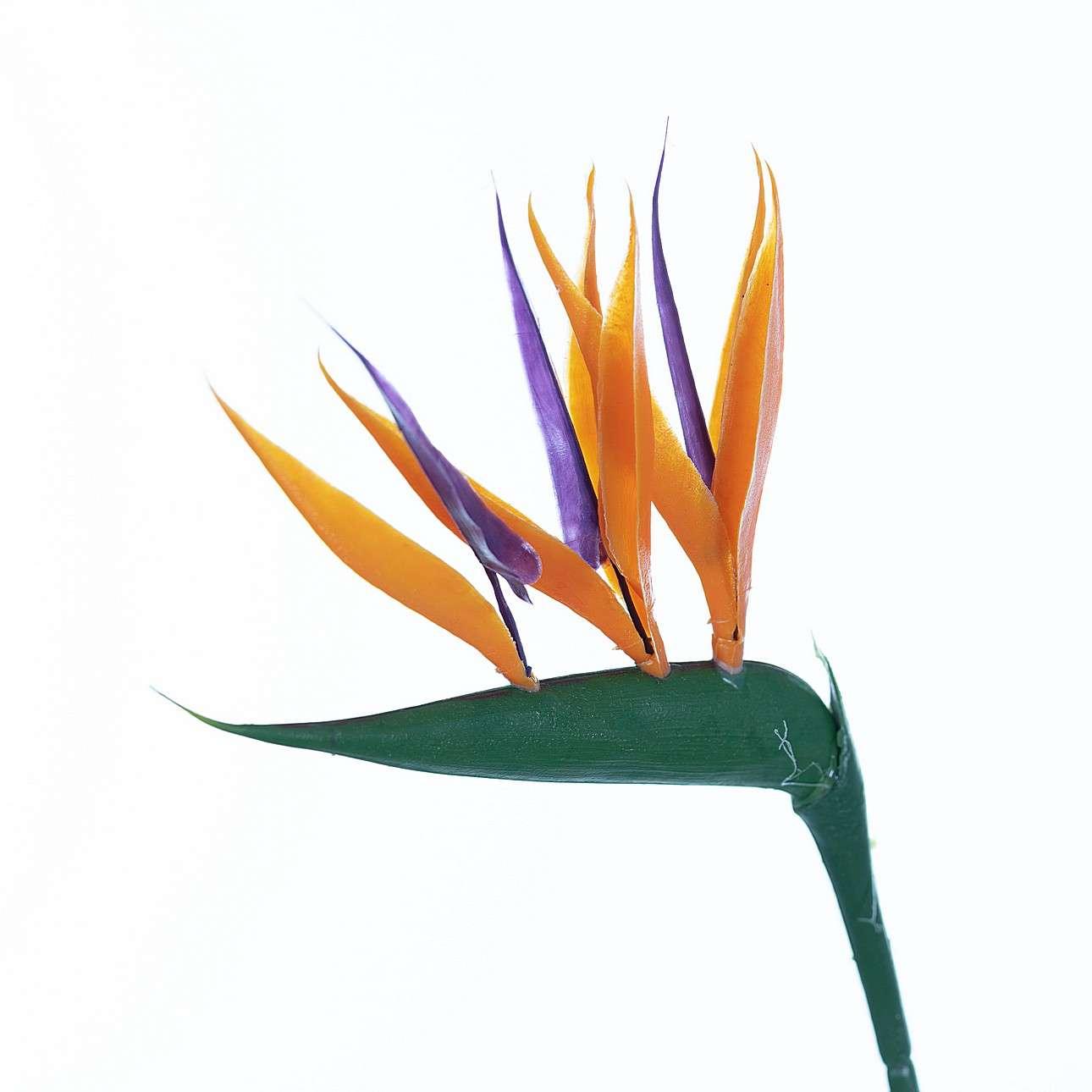 Kunstblume Strelitzie 66cm