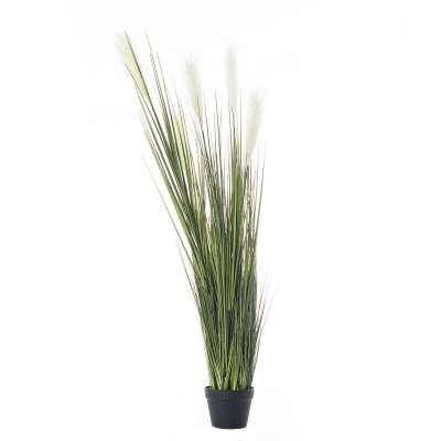 Dekoration Pampas Grass 145cm