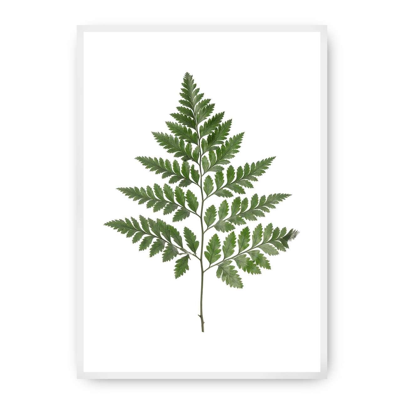 Poster Fern Green, 40 x 50 cm, Rahmen wählen: weiss   Dekoration > Bilder und Rahmen > Poster   Dekoria
