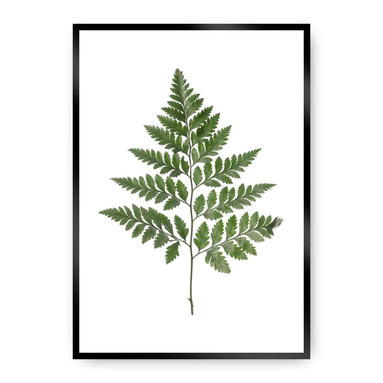 Poster Fern Green, 50 x 70 cm, Rahmen wählen: schwarz | Dekoration > Bilder und Rahmen > Poster | Green | Dekoria
